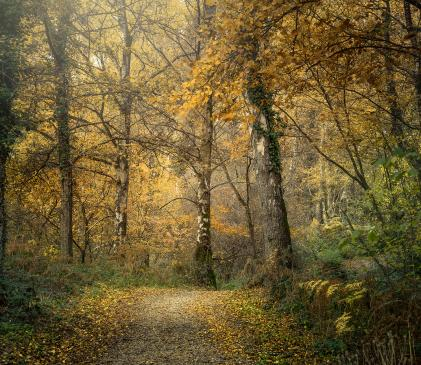 Pearl Lake woodland walk in full autumn colours photo