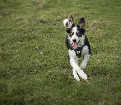 Dog friendly holiday parks, off lead dog running at Pearl Lake