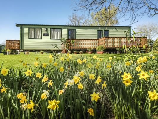 Daffodils at Arrow Bank 5 star holiday park Herefordshire