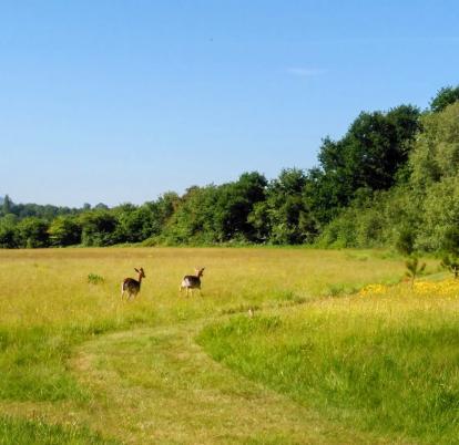 Nature trail at Arrow Bank photo